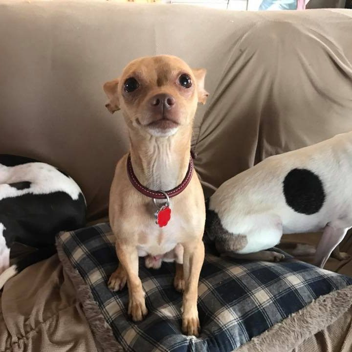 Odie up for adoption